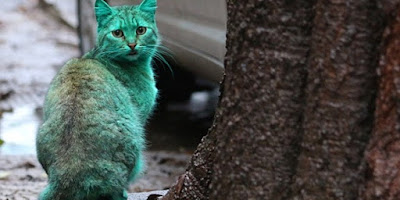 Kucing Berbulu Hijau Kejutkan Para Pejalan Kaki