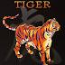 2017 Anul Cocosului de Foc si zodia Tigrului