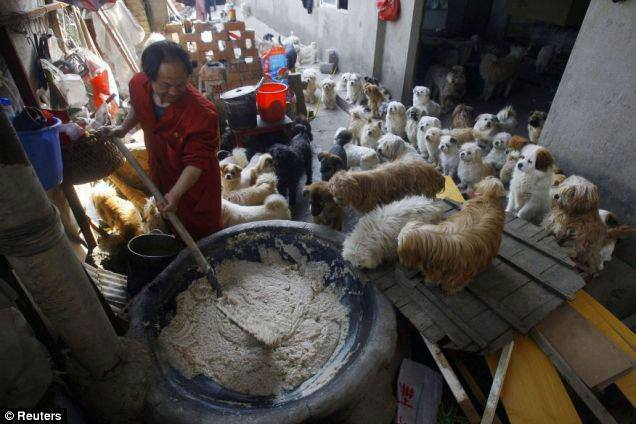 Li Zongwen, dog shelter