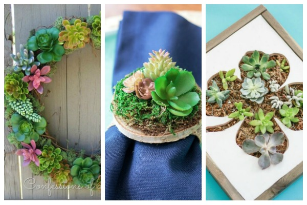 succulent home decor ideas