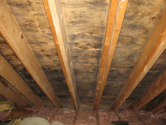 How To Kill Black Mold On Wood And More