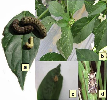 Bio Pestisida