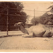 100mm x 80mm Photograph from Untitled Album: 057