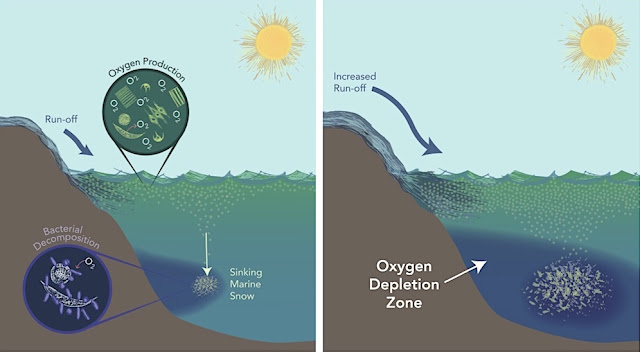 Study estimates oxygen loss in ancient global ocean