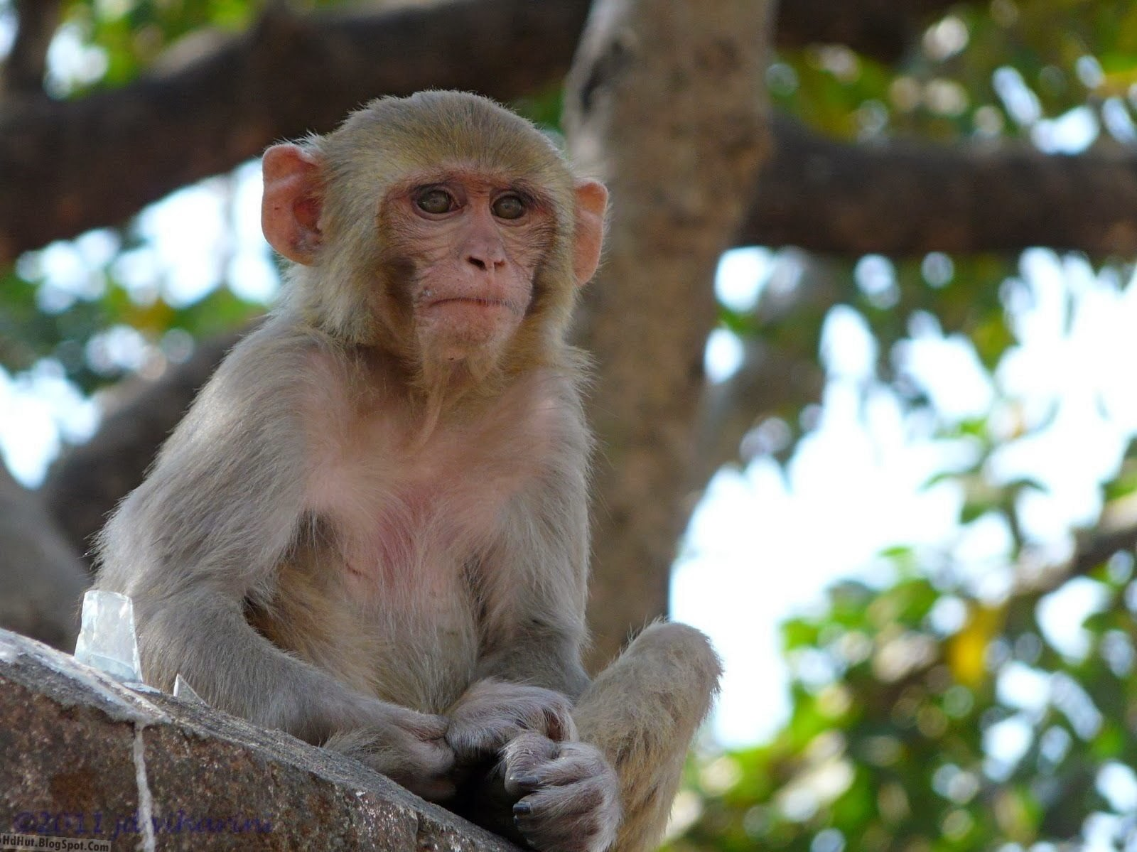 top 16 Most Cute And Beautiful Monkey Wallpapers In HD ( new )