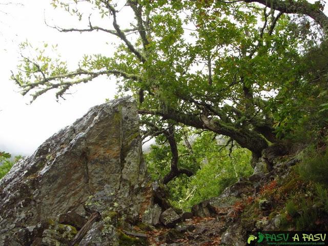 Rocas cuarcitas en Muniellos