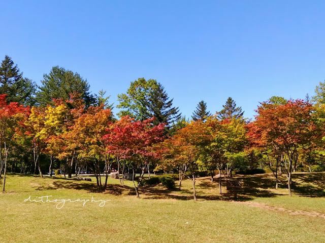 taman maple nami island korea selatan