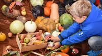 Gemüsespenden zum Erntedank Hohenaspe