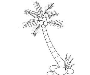cara+menggambar+pohon+kelapa