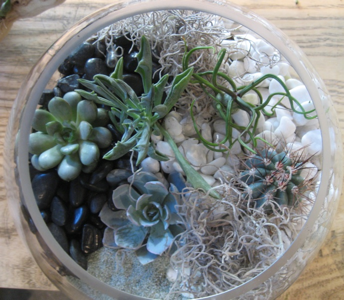 Sammy's Flowers: Succulent Terrarium Care