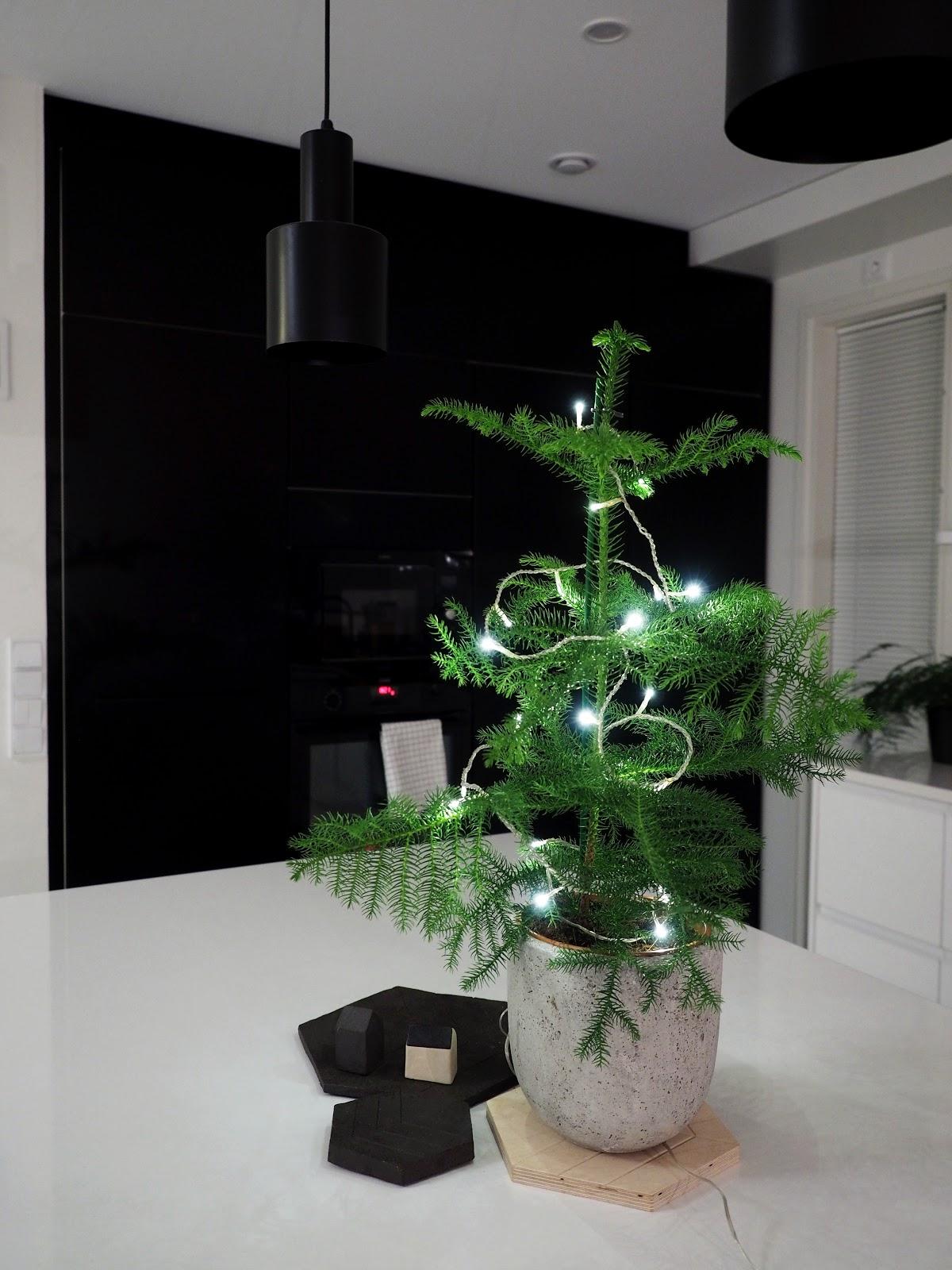 Huonekuusi, jouluvalot, keittiö