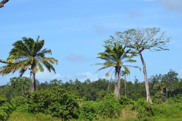 Guyane, kourou, route de Guatemala, plage