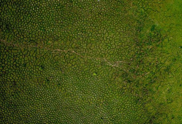 ديدان الأرض,تلال,أمريكا الجنوبية,سوراليس