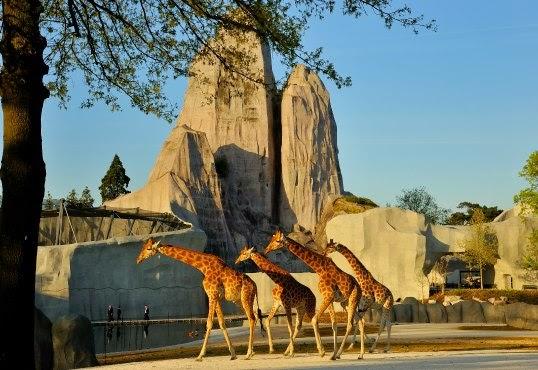 Le giraffe dello zoo di parigi