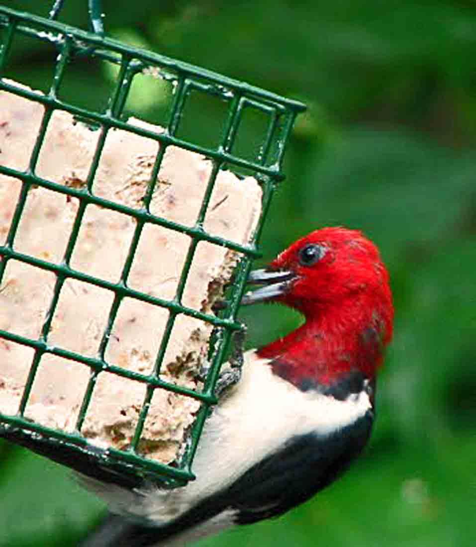 joyful reflections birds birds birds
