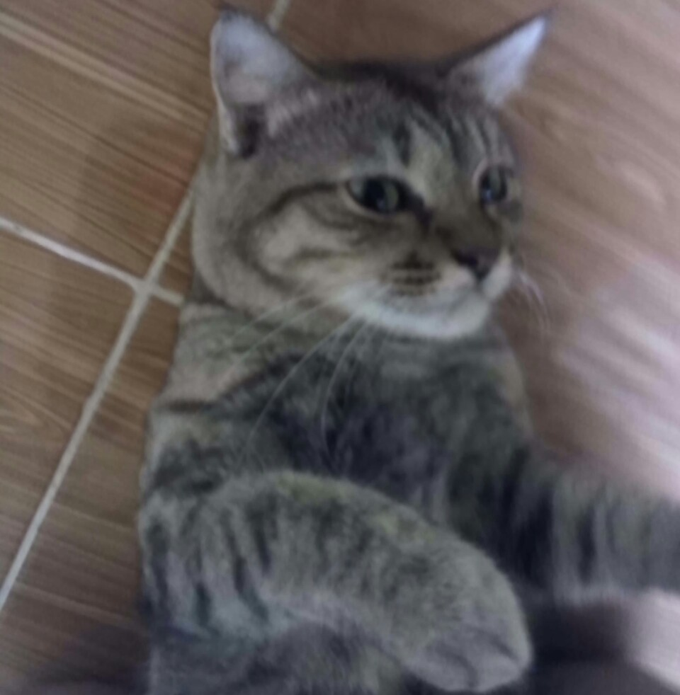 Qori Menulis Blog Pengalaman Seni Memelihara Kucing Kampung