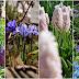 Łąka z kwiatów cebulowych #2.