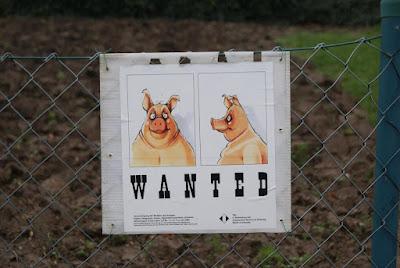 Ein Suchschild an einem Zaun. Gesucht wird ein Schwein