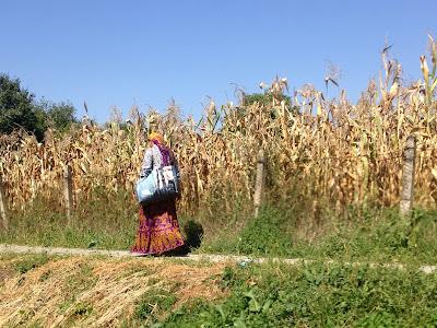 Cyganie w Rumunii