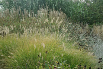 Layers and waves of ornamental grasses and perennials in autumn Toronto Music Garden by garden muses: a Toronto gardening blog