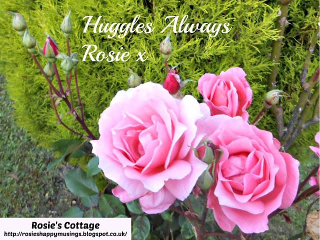 Huggles Always Honeys, Rosie x