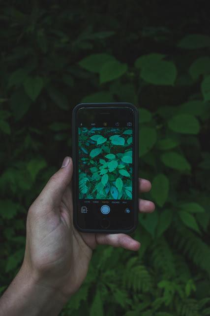 comment identifier une plante avec son téléphone portable