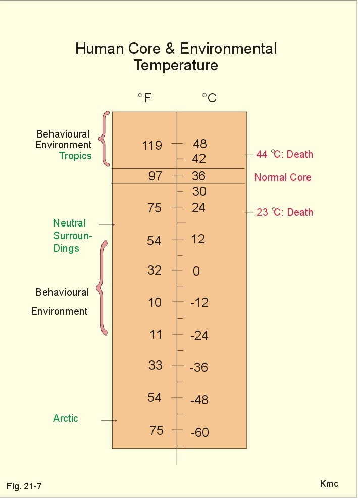 Fever in celsius adults not absolutely