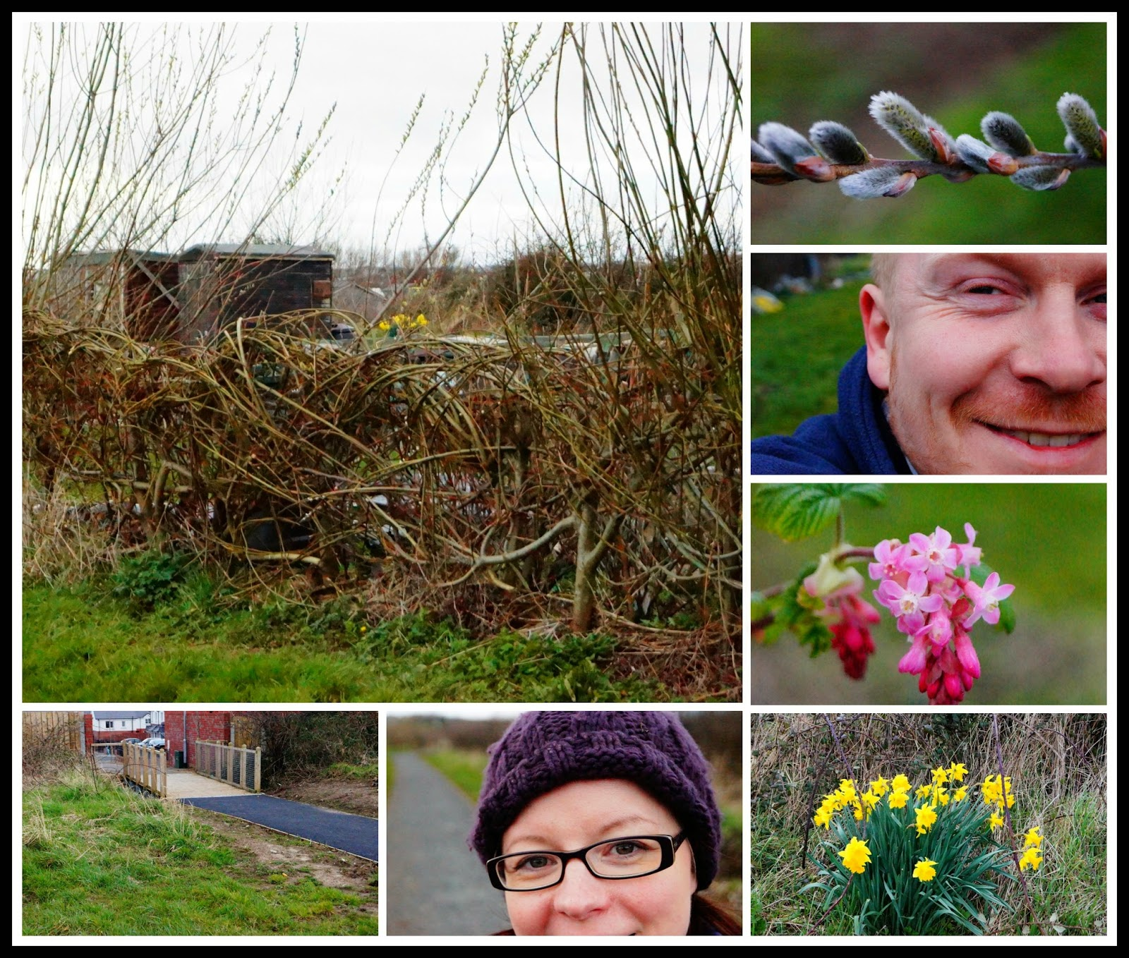 Another collage from day 2 - 'growourown.blogspot.com' ~ allotment blog