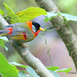 Photographic Wildlife Stories in Hong Kong: More Colourful Wintering Birds
