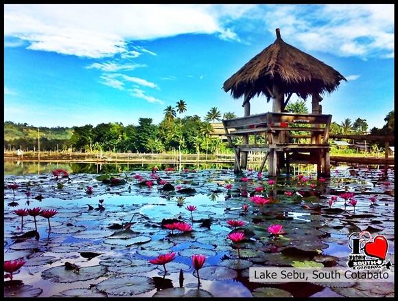 Mountain log resort in lake sebu south cotabato news i love lotuses blooms early in the morning at lake sebu thecheapjerseys Gallery