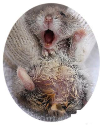 cach-chua-va-tri-benh-uot-duoi-o-chuot-hamster