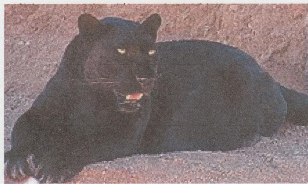 Edward Cline Black Panther Cultural Marxist Soul Food