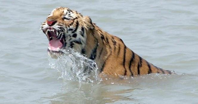Sunderbans Wildlife Sanctuary And Sundarbans National Park Review