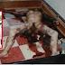สยอง!! เจ้าบ่าวฆ่าเจ้าสาวตายในคืนแต่งงาน แค้นที่ ไม่บริสุทธิ์??