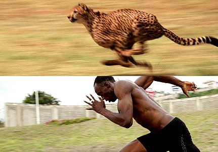 How Fast Do Cheetahs Run theKONGBLOG™: World'...