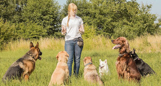 Dog Behavior Training - How to Train a Dog to be Obedient? Essential commands you can teach your dog