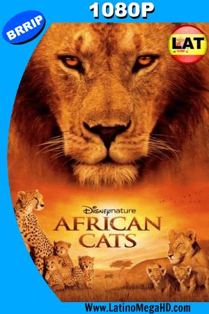 Grandes Felinos Africanos: El Reino Del Coraje (2011) Latino HD 1080P ()