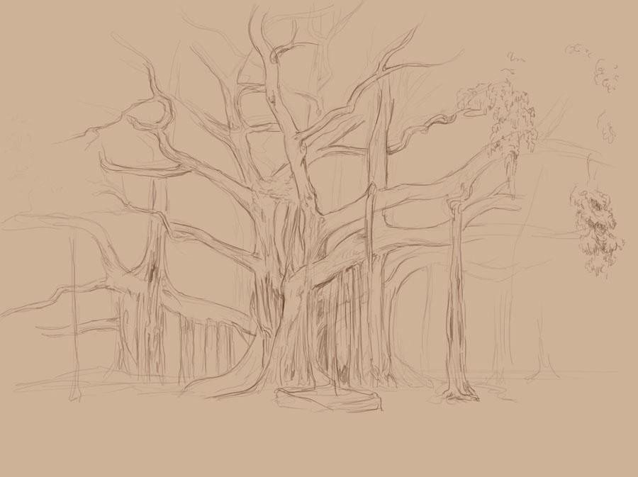 [Image: Ficus_macrophylla_3Estuido1.jpg]