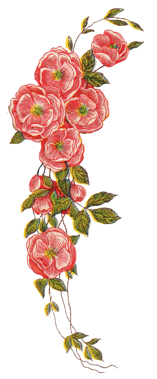 Leaping Frog Designs: Cascading Roses Vintage PNG Image