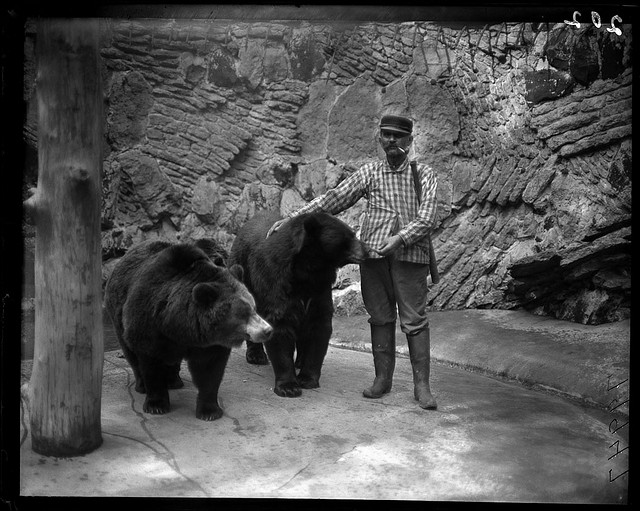 Zookeeper Feeding Bears At Lincoln Park Zoo In Chicago