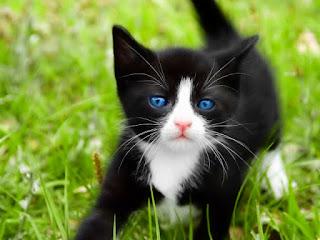 صور جميله , صور قطط جميله