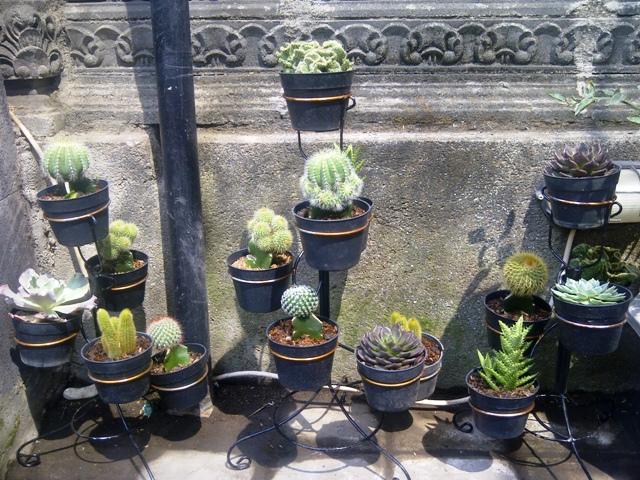 Putra Garden Bali Paket Tanaman Hias Kaktus Mini