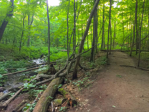 The trail into Parfrey's Glen is mostly easy but then becomes difficult