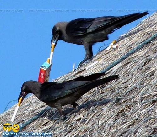 It Happens Only In India Indian Funny Crow