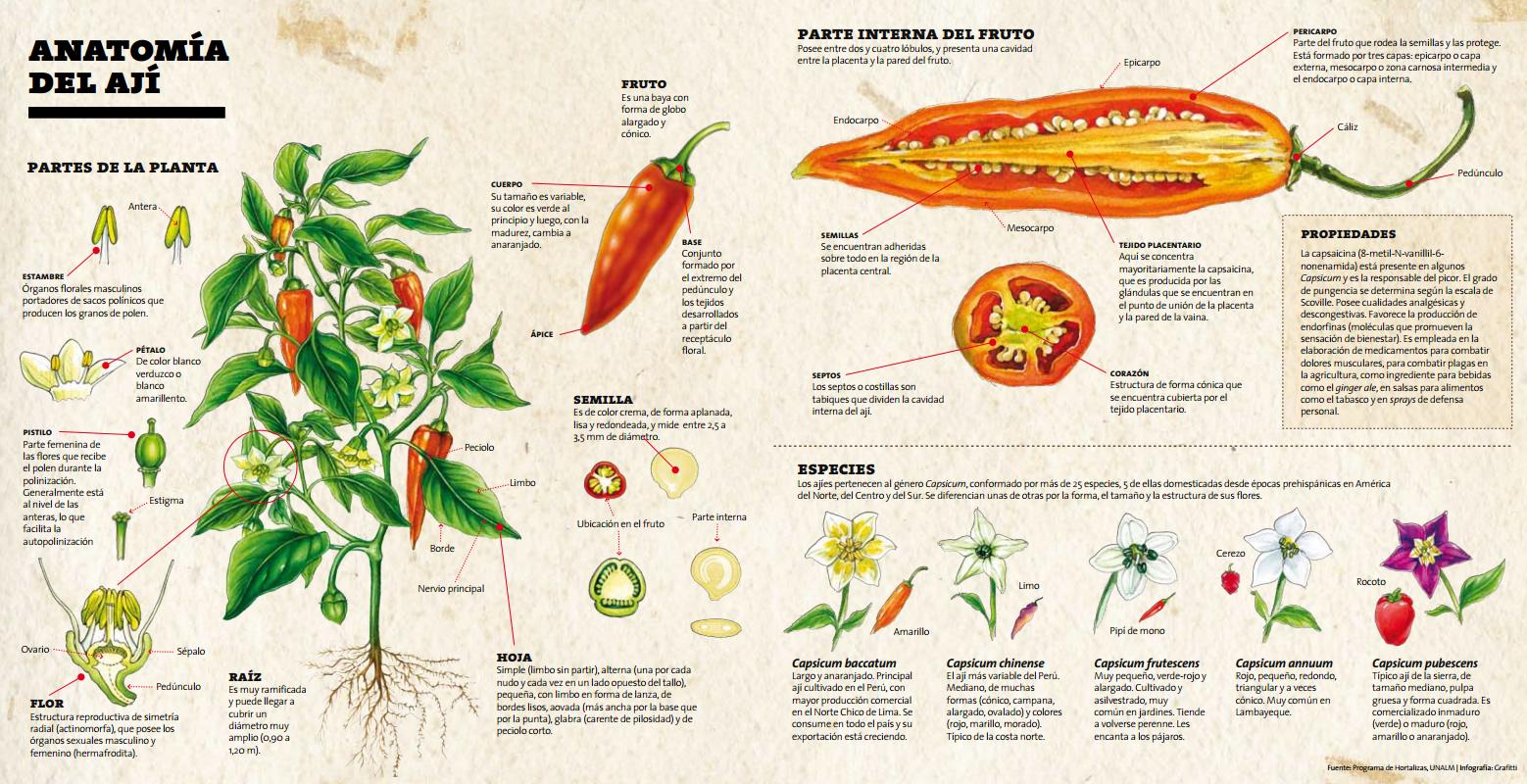 Yo No Soy Cocinero...: Anatomia del Aji