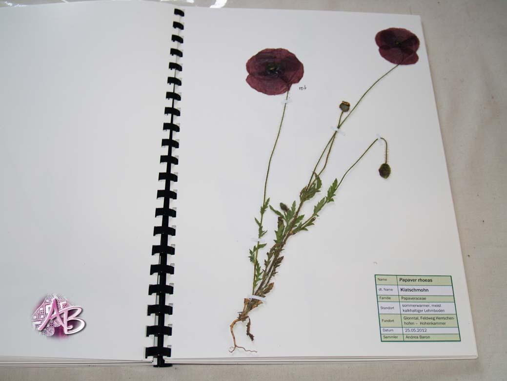 atelier andrea baron kleines herbarium. Black Bedroom Furniture Sets. Home Design Ideas