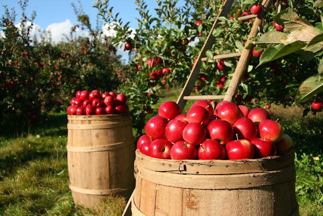 Apples. Eat so what. Smart Food blog by La Fonceur