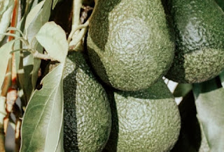 Guacamole Argentino