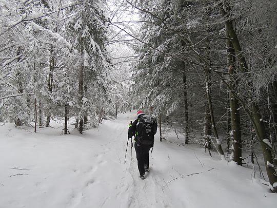 Las odział się już w białe zimowe kubraki.
