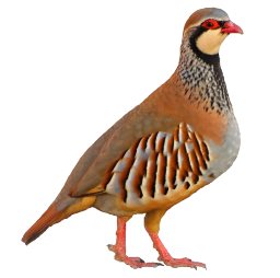 Aplicación de Audio Pajaros y Aves